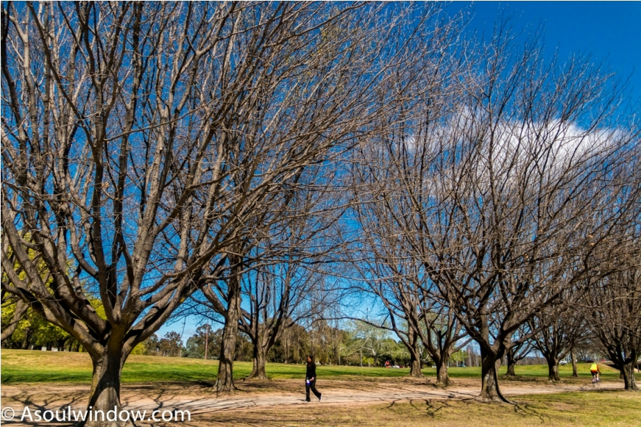 Lake Burley Griffin Canberra Australia (2)