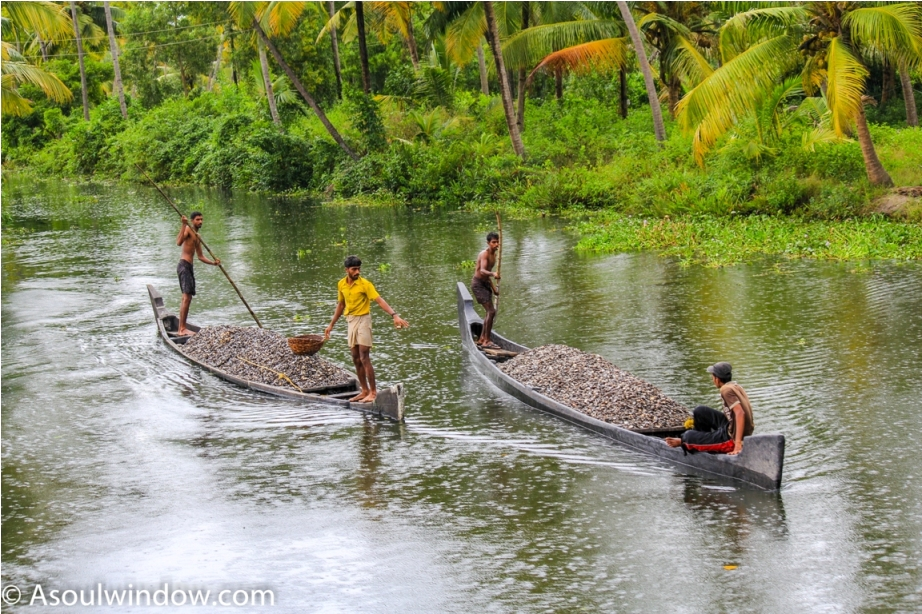 Alleppey Alappuzha. Vembanad lake Backwaters Kerala India (3)