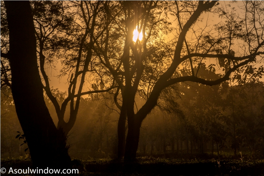 Sunset tea garden Manas National Park Bodoland Assam India (26)