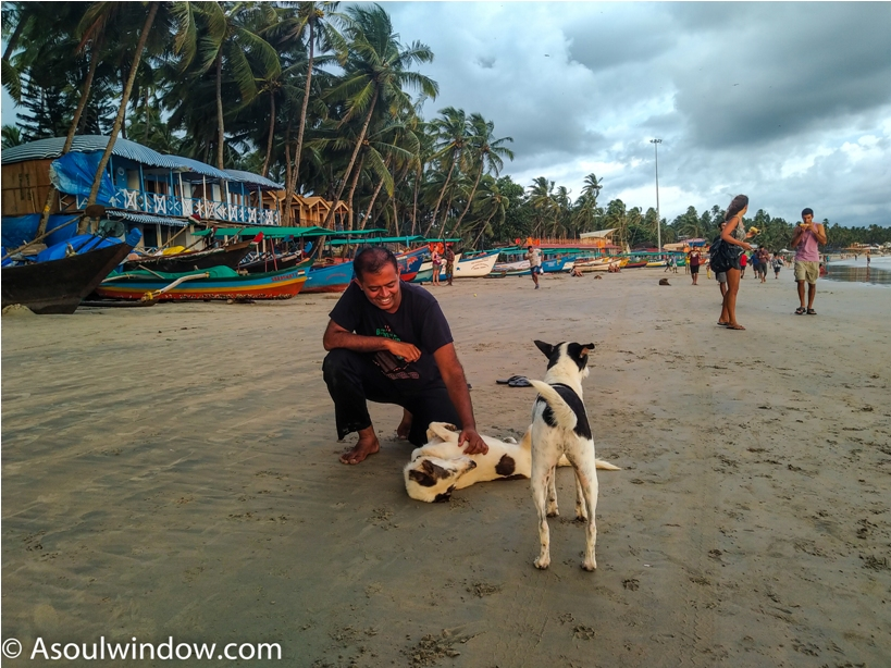 Dog Palolem Patnem Beach South Goa India (17)