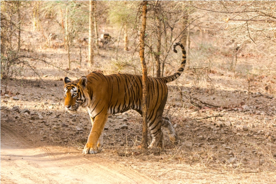 Satpura national Park & Tiger Reserve National Park in Madhya Pradesh