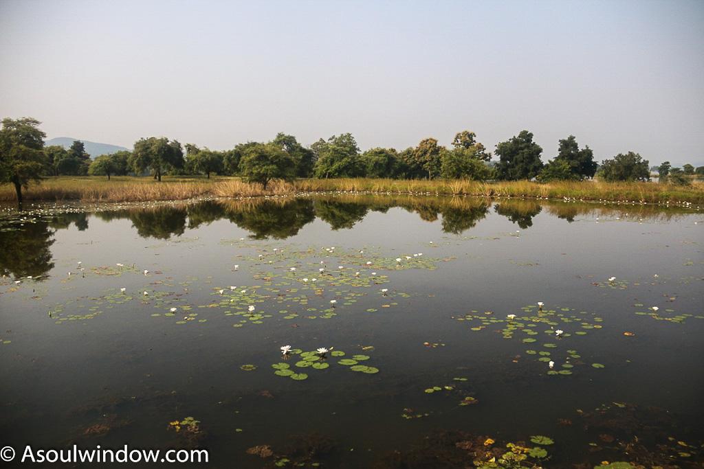 Satpura national Park pond